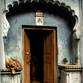 The Writing's on the wall by Maricha Knight van Heerden - Buildings & Architecture Other Exteriors ( it's a dog's life, natural light, urban decay, india, open door, street scene, shabby, dog, urban life, blue buiding, travel photography )