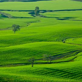 by Abdullah Toker - Landscapes Prairies, Meadows & Fields ( green )