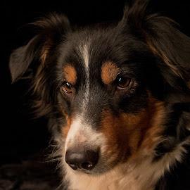 Yoshi by Marjan Smit - Animals - Dogs Portraits