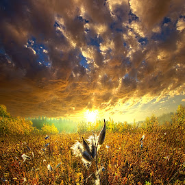 Longing to Return by Phil Koch - Landscapes Sunsets & Sunrises ( vertical, photograph, bench, blue   sky, milkweed, fine art, yellow, travel, leaves, love, sky, nature, tree, autumn, trail, picnic table, light, flower, orange, twilight, agriculture, horizon, portrait, environment, dawn, season, serene, outdoors, trees, wild   flowers, floral, inspirational, natural light, wisconsin, ray, landscape, phil koch, photography, sun, path, seeds, horizons, inspired, office, clouds, park, green, seed, back light, scenic, morning, ferns, shadows, field, red, blue, color, sunset, peace, fall, meadow, landscapephotography, beam, earth, sunrise, landscapes, hike, mist,  )