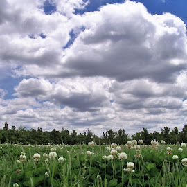 The Perfect Day by Elizabeth Burton - Landscapes Cloud Formations ( clouds, blades of grass, grass, green, white, spring, perfect day, spring time, clovers, sky, fluffy clouds, blue, meadow, trees, perfect weather, fiels, skyscape )