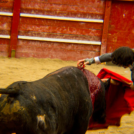 Bullfight by Alejandro Villaseñor - Novices Only Sports ( fight, blood, dead, bull, spain, bullfight, sword )
