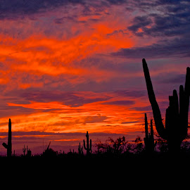 Desert Sunset by Robert Remacle - Landscapes Deserts