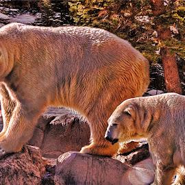 oso en la foresta by Victor Pizzola - Digital Art Animals