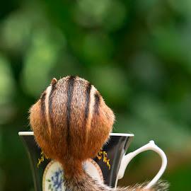 Tea Time by Karen Raymond Burke - Animals Other Mammals ( sweet, chipmunk, eating, tea cup, cute, garden, tail, portrait )