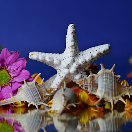 by Dipali S - Artistic Objects Other Objects ( shells, spiked, petals, still life, starfish, seashells, flower )