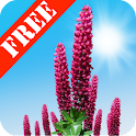 Wild Lupins Free icon