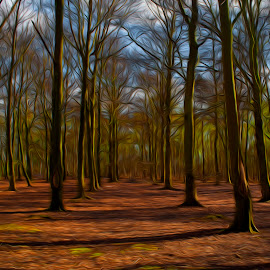 Colourful woods in spring by Ruth Holt - Digital Art Places ( south yorkshire, doncaster, woodland, spring, woods )