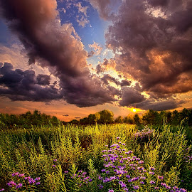 Into the West by Phil Koch - Landscapes Cloud Formations ( vertical, photograph, farmland, yellow, leaves, love, sky, nature, tree, autumn, flower, orange, twilight, agriculture, horizon, portrait, environment, dawn, season, serene, trees, floral, inspirational, natural light, wisconsin, phil koch, spring, photography, sun, farm, horizons, inspired, clouds, office, park, green, scenic, morning, shadows, wild flowers, field, red, blue, sunset, fall, peace, meadow, summer, earth, sunrise, landscapes )