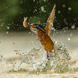Fishing by Alberto Carati - Animals Birds