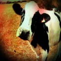 Cow Sound Effects icon