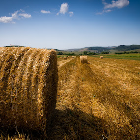 field of fields by Lupu Radu - Landscapes Prairies, Meadows & Fields ( field, maramures, straw bales,  )
