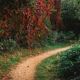 autumn in my back garden by Tavi Ionescu - Landscapes Forests ( london, vintage, 2014, autumn, amazing colors, back garden, autumn colours, road, leaves, united kingdom )