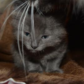 by Deanna Clark - Animals - Cats Kittens