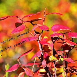 Autumn colours by Monique Anne Marchand - Typography Captioned Photos ( colour, nature, colorful, autumn, forest, leaves )