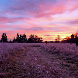 Sunrise in Onalaska, Washington by Tammy Tran - Landscapes Prairies, Meadows & Fields ( wonders, meditation path, nature's art, sunrise )