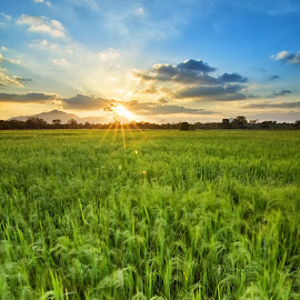 Hometown! by Fiziey Shaidi - Landscapes Prairies, Meadows & Fields ( field, lee filters, nature, sunset, paddy, d90, green, nikon, landscape )