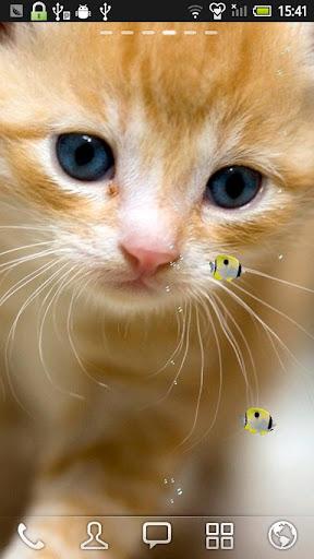玩個人化App 一点青蝶和小猫 动态壁纸免費 APP試玩