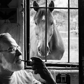Silenzio... by Iosif Vajnar - Animals Horses ( statue, horses, miholcsa, cai, lovak )