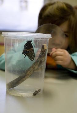 butterfly alli 1