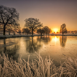 Golden Hour by Tim Mccombie - Landscapes Sunsets & Sunrises ( bushy park )