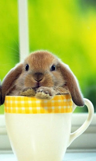 Rabbit HD LWP Full
