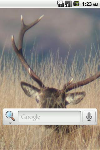 個人化必備免費app推薦 鹿狩りライブ壁紙線上免付費app下載 3C達人阿輝的APP