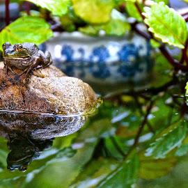 LIL Walt Chillaxin' by Michael Crawley - Animals Amphibians (  )