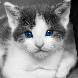 Those eyes by Martin Green - Digital Art Animals