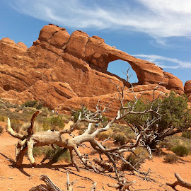 Desert Arch, trees, and Sky by MaryAnn Sei - Landscapes Deserts ( desert, arch, formations, trees, rocks,  )