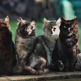 Bylo jich pět by Miloš Stanko - Animals - Cats Kittens ( zahrada, kočky )