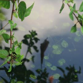 stillness by Eric Rainbeau - Nature Up Close Water
