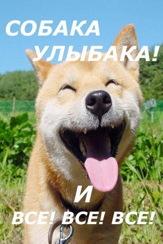 狗Ulybaka