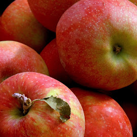 Oregon apples crop is coming in by Liz Hahn - Food & Drink Fruits & Vegetables