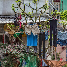 after lots of rain by Vibeke Friis - Artistic Objects Clothing & Accessories ( tree, clothing, street, washing drying,  )