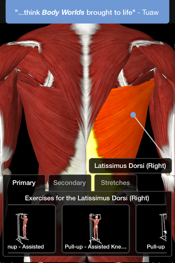 iMuscle 2 Screenshot 1