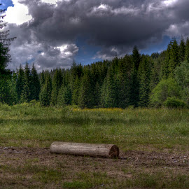 Elatia by Stratos Lales - Landscapes Forests ( clouds, sky, wood, tree, forest )