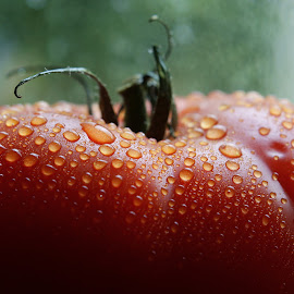 WET TOMATOES by Iva Aviana - Food & Drink Fruits & Vegetables ( red, tomato, drops, healthy, vegetable, close up )