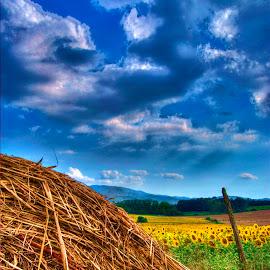 Profumo d'estate by Tonino De Rubeis - Landscapes Prairies, Meadows & Fields