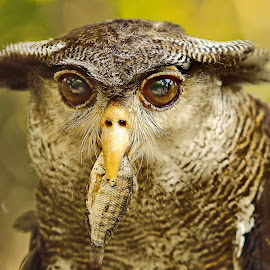 by DODY KUSUMA  - Animals Birds