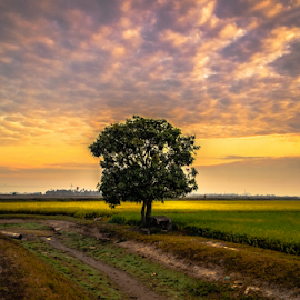 by Mohamad Subri Mohd Noor - Landscapes Prairies, Meadows & Fields