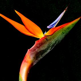 Pontas para o céu by Francisco Andrade - Flowers Flower Gardens ( lilás, amarelo, flor, entreliça, cores )