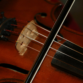 violin by Matthew Dominique - Novices Only Objects & Still Life
