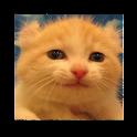 puzzle cat b(4x4) icon