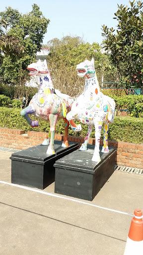 Horse at Canal dos Patos