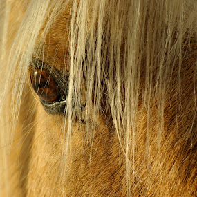 Charlie by Giselle Pierce - Animals Horses
