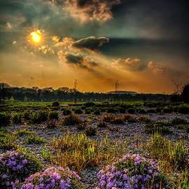 Stone Garden by Joern Fellenberg - Landscapes Prairies, Meadows & Fields ( sky, sunset, stone, flowers, garden )