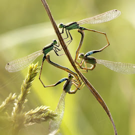 4 Some :P by Ever Green - Animals Insects & Spiders