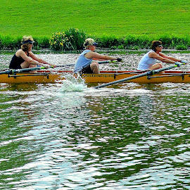 Down Stream by Vince Scaglione - Sports & Fitness Watersports ( stroke, stream, rowing, boat, women, paddle, river )