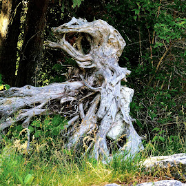 Driftwood by Ray Gradel - Novices Only Landscapes ( driftwood, tree, roots, beach, lakefront )